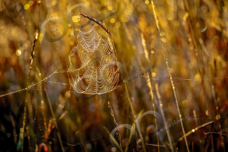 spider web-3155 - Insects from around the world