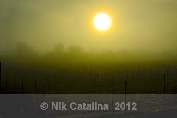Sunrise Over Vineyards - Landscapes
