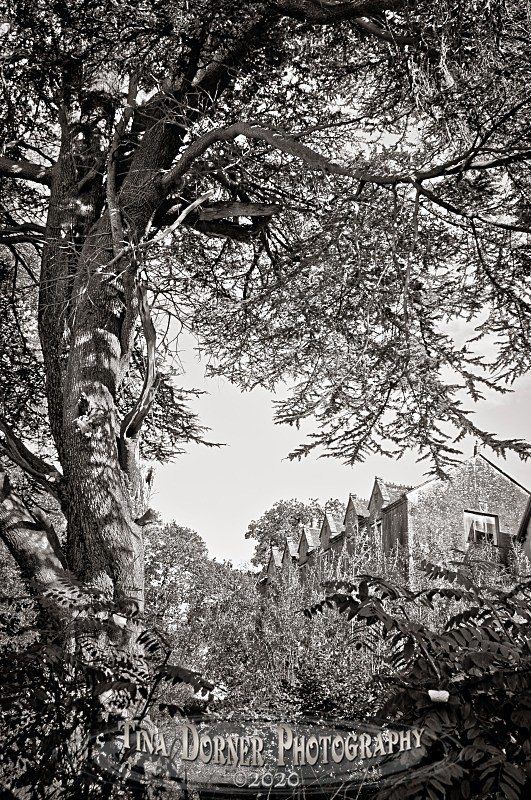 Littledean Hall by Tina Dorner Photography, Forest of Dean and Wye Valley, Gloucestershire