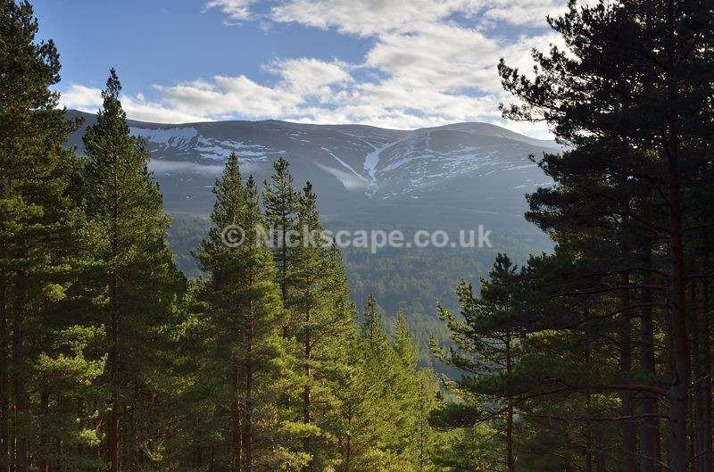 Glenmore Forest and Cairngorm Mountains Ski Area   Aviemore   Cairngorms   Scotland