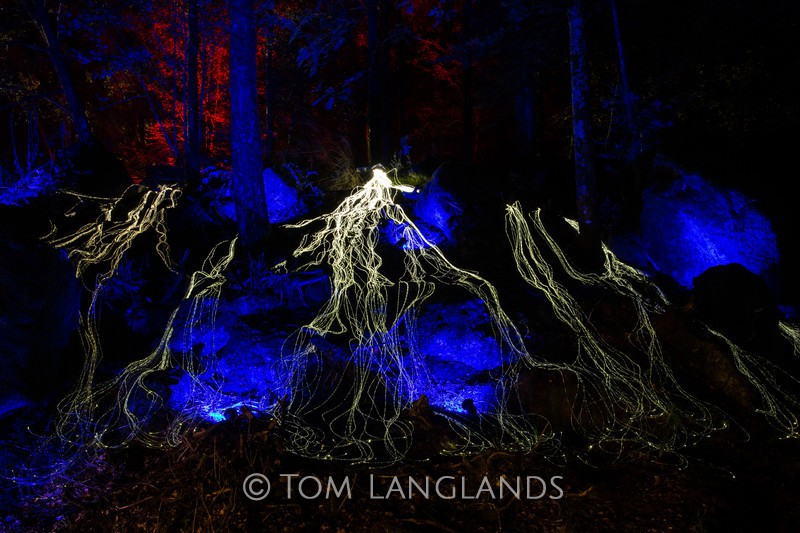 The Enchanted Forest - Events