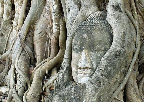 Buddha Tree - Ayutthaya
