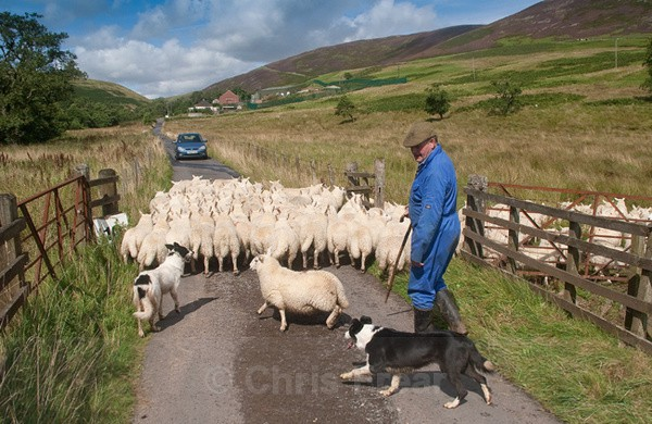 Traffic Jam - Farming/Agriculture