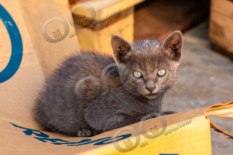 Cat domestic-904 - Pet Photography