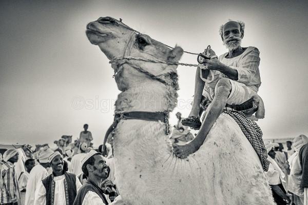 Sudan, Karmakol, Camel Racer