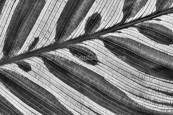 Lineation - Black and White
