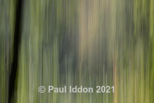 Woods 01 - Creative