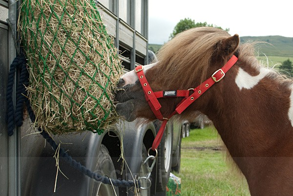 28 - Moniaive Horse Show 2010