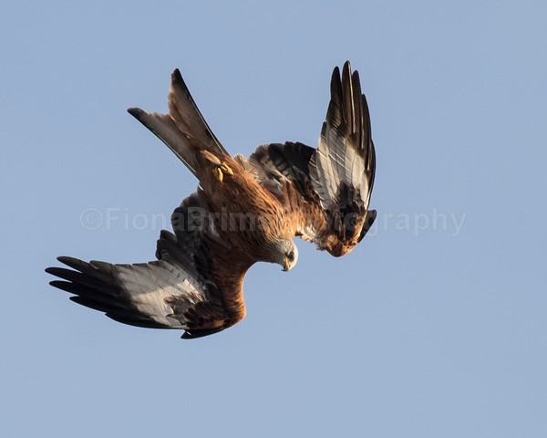 argaty jan -72 - Birds of Prey