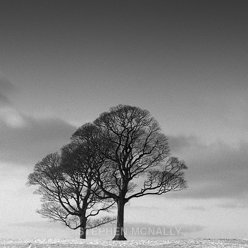 Winter Trees - Images made on Film