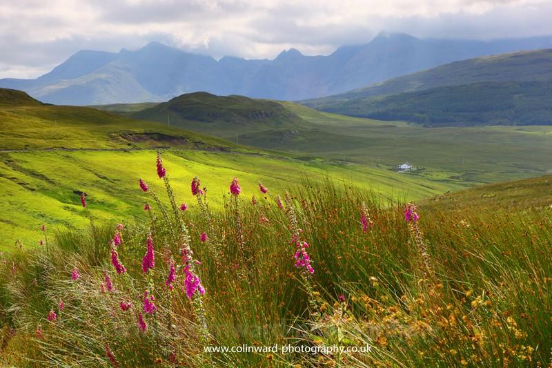 Foxgloves in Glen Eynort, Skye.       ref 6220 - West Highlands