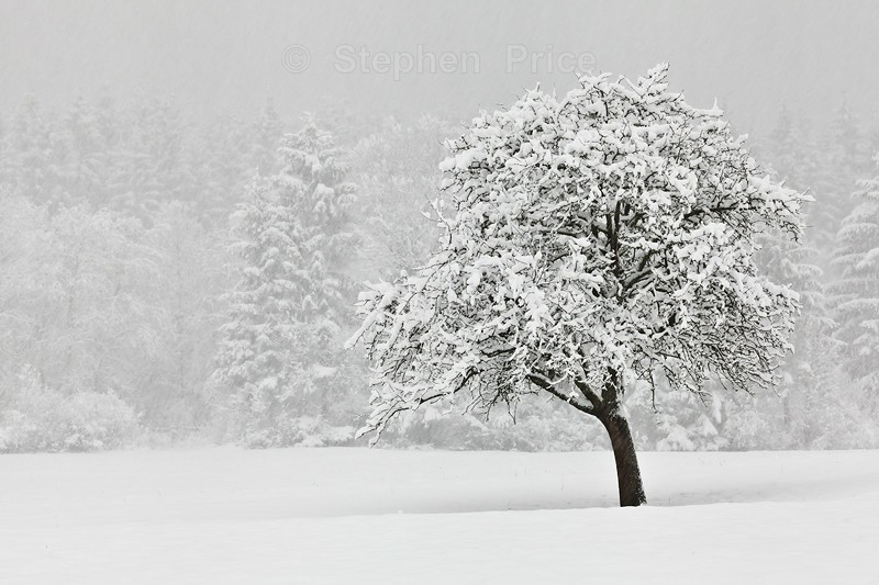 Lonely Snow Covered Tree | Winter Tree in Slovenia