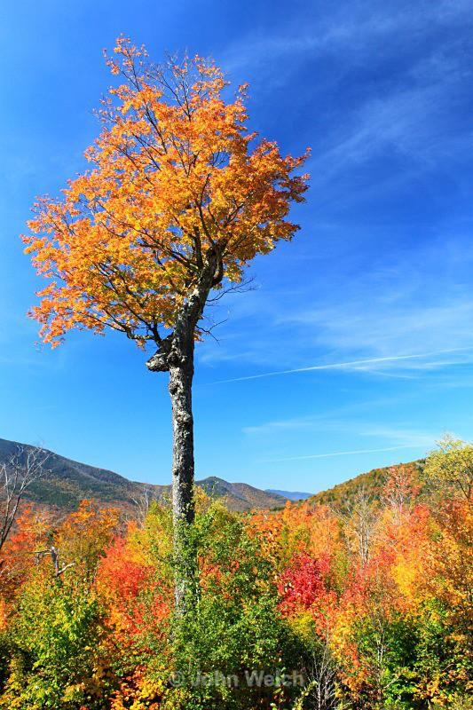 The Tree - Fall Foliage Season Transitions
