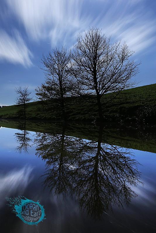 Three Trees - Landscapes