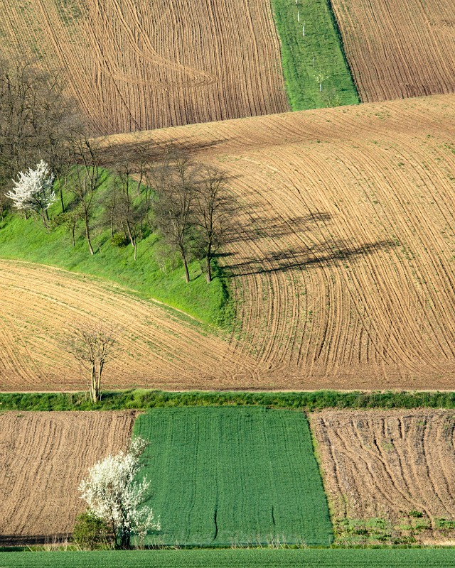 tree shadow - Moravia