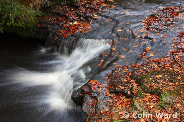 Small Waterfall at Hamsterly.Ref 4620 - County Durham