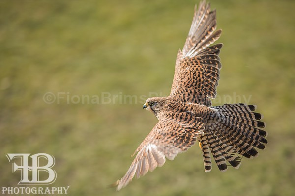 wow march 3-18 - Birds of Prey