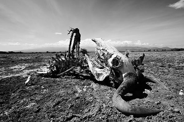 Drought Amboseli Kenya 2009