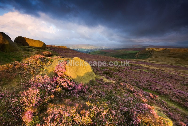 Dawn Heather at Higger Tor and Callow Bank | Photography from the Peak District
