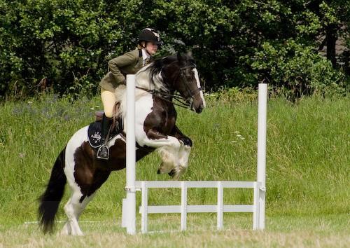 82 - Moniaive Horse Show 2008