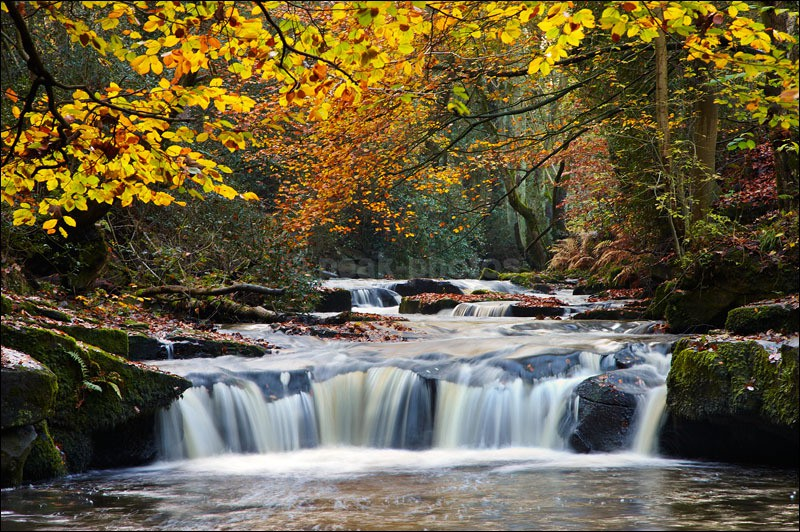 Rivelin Valley - Photographs of Woodland & Rivers