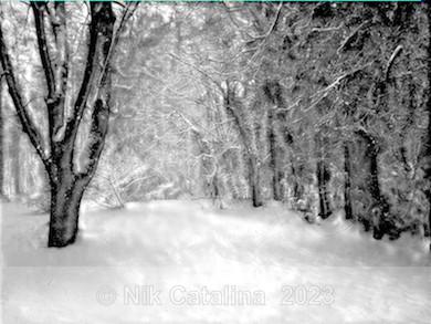 Snowland - Landscapes