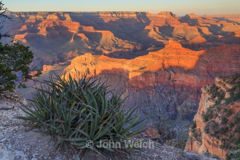 Alpenglow and Agave - Arizona