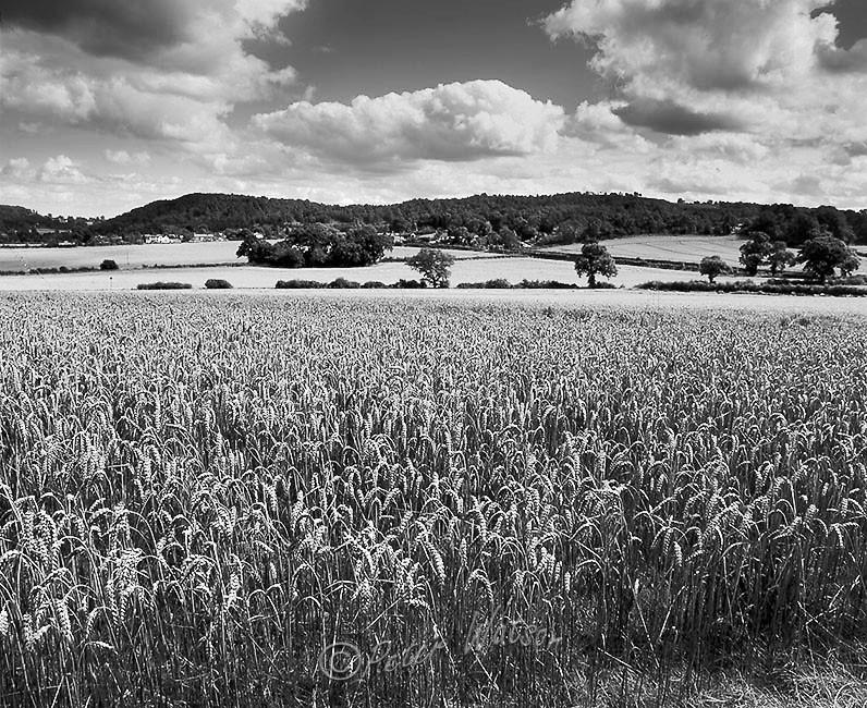 Broxton Cheshire England - Monochrome