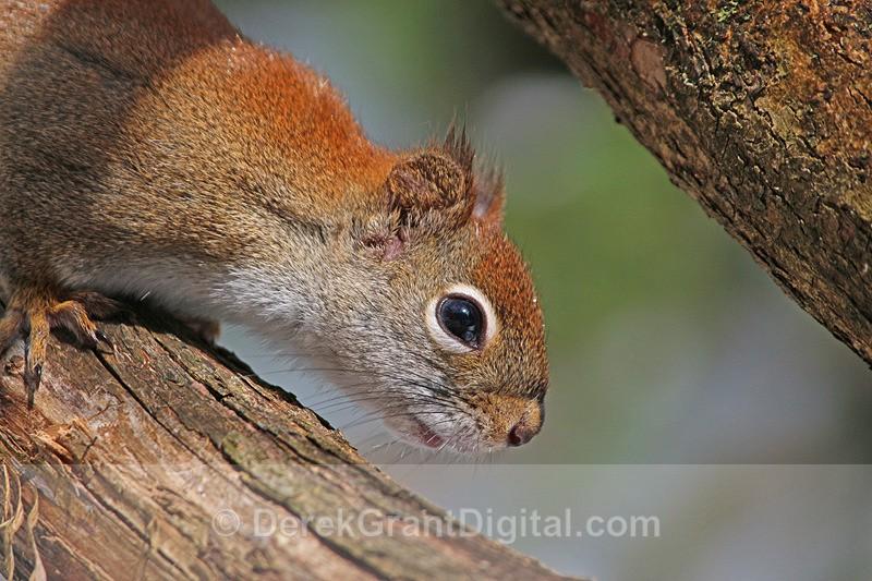 Curious Rodent - Mammals, Reptiles & Amphibians