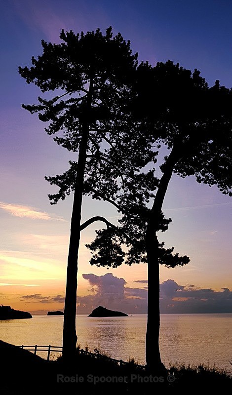 Silhouetted trees at Meadfoot Beach looking towards Thatcher Rock - Torbay
