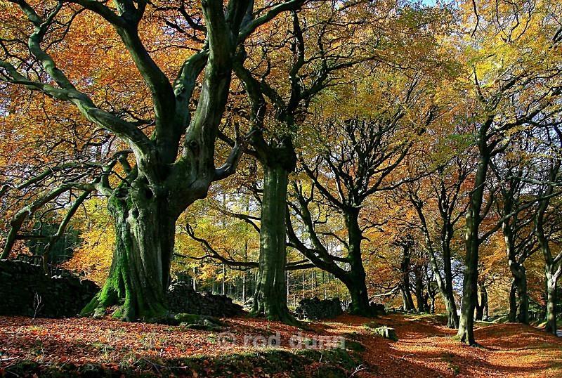 Goyt Valley autumn trees - Peak District