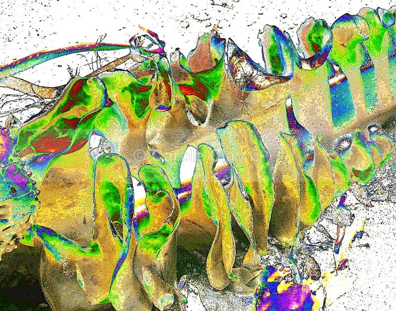 Spiral seaweed 2 - Seaside Themes