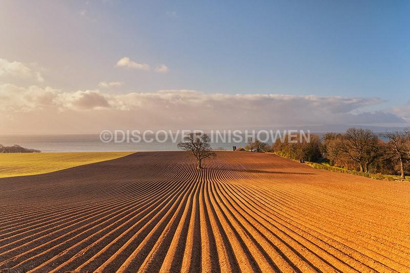 Redcastle Tree - Inishowen peninsula