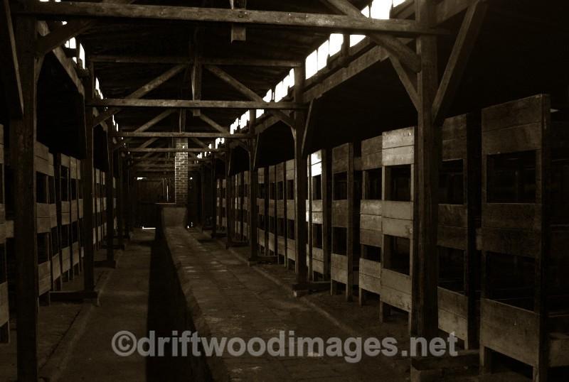 Birkenau  hut wooden bunks 2 sepia - Auschwitz/Birkenau