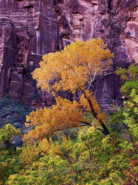 Zion National Park Utah - USA
