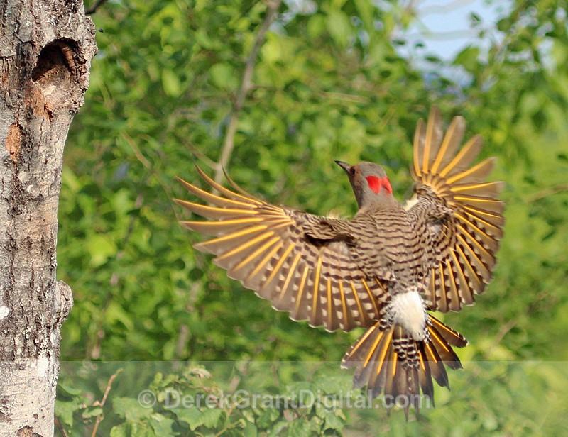 Coming Home - Birds of Atlantic Canada