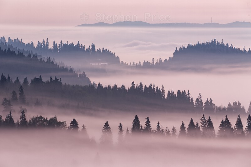 Misty Valley | Poland Landscape Photography | Trees in Mist