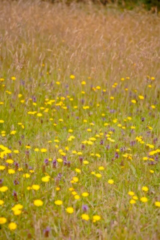 wildflowers - Oregon