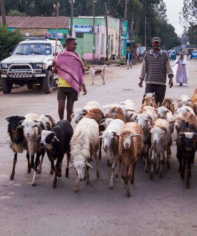 Bahir goat herder - Ethiopia