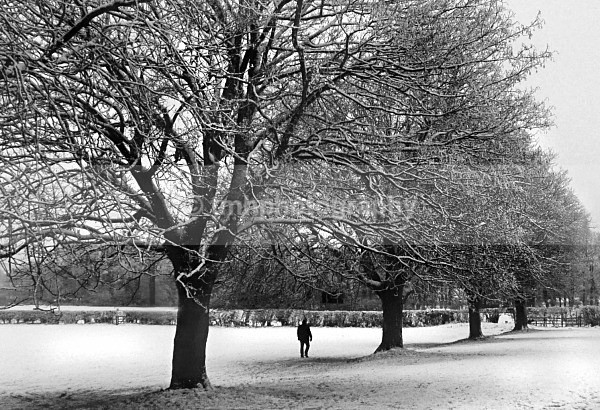 Walking in the Snow. - Monochrome Photograph's