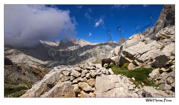 Picos 006 Wild Horse, Picos - Picos de Europa, Spain