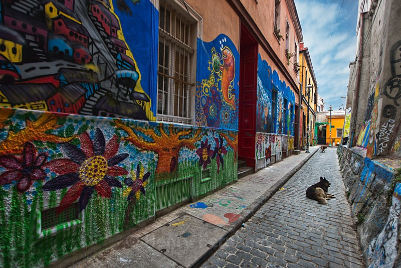 - Street Art & Stray Dogs - Valparaiso, Chile