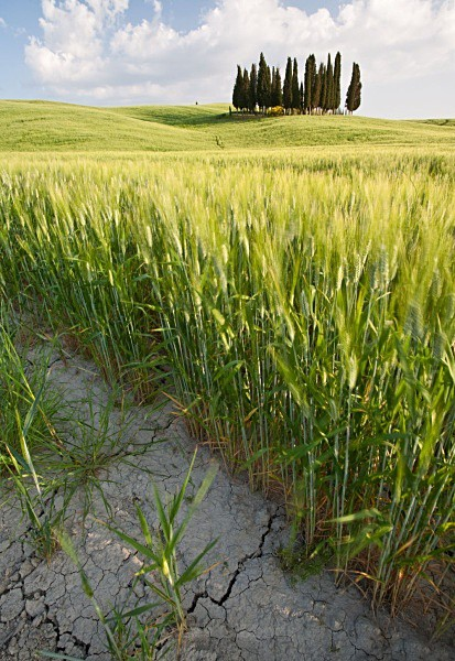 parched earth - Tuscany