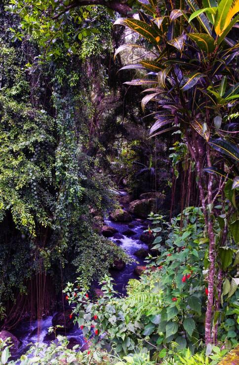 Bali Jungle - Bali's Lush Heartland