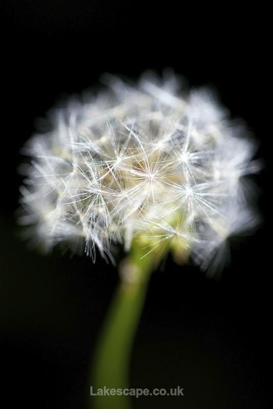 Transience - Flowers