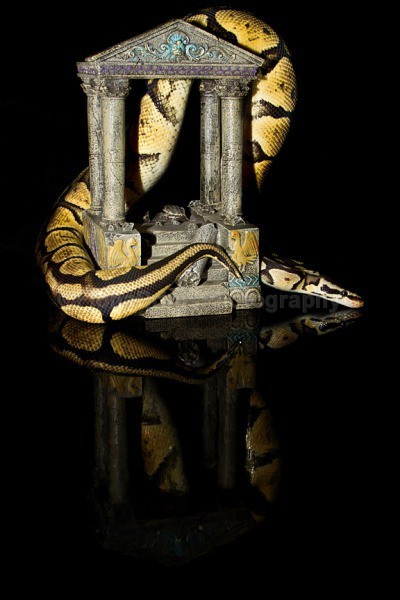 Clyde 2 - Reptile Photography