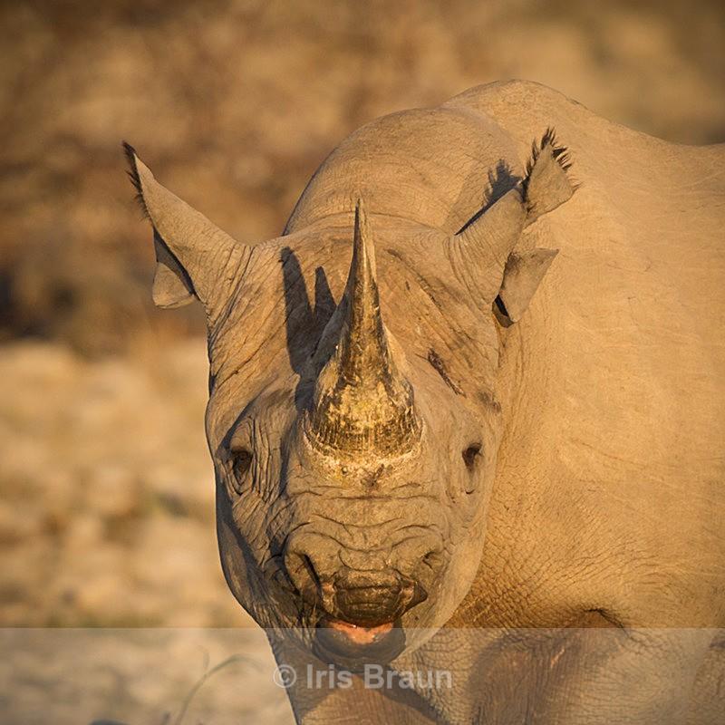 Marilyn Monroe - Rhino