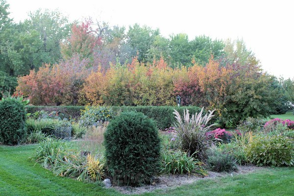 Autumn Garden - Nature
