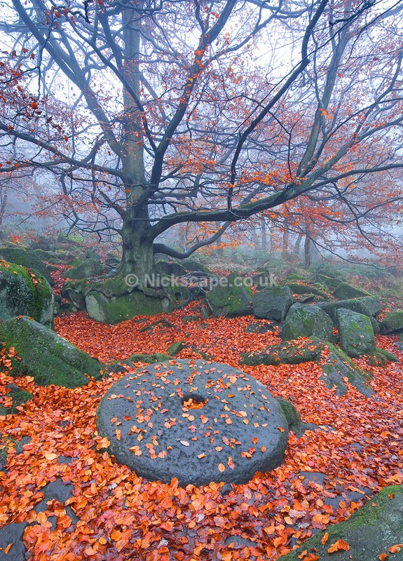 Famous Millstone at Padley Gorge during autumn | Peak District Photography