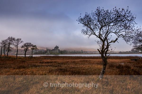 Marshland. - Landscape